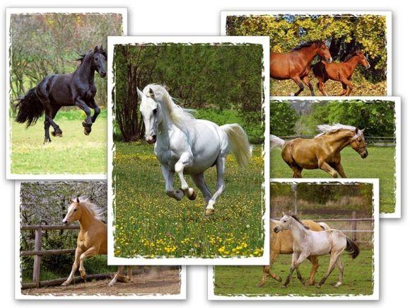Pohlednice dětské koně - mix motivů
